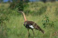 Maranatha Tours and Travel Uganda: Vogelbeobachtung