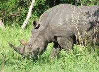 Maranatha Tours and Travel Uganda: Rhinos