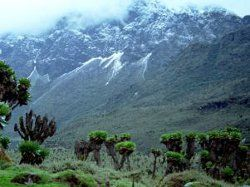 Ruwenzori mountains in Uganda