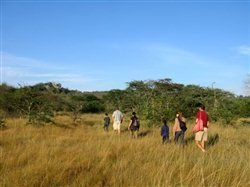 Walking safaris at Lake Mburo National Park with Mihingo Lodge